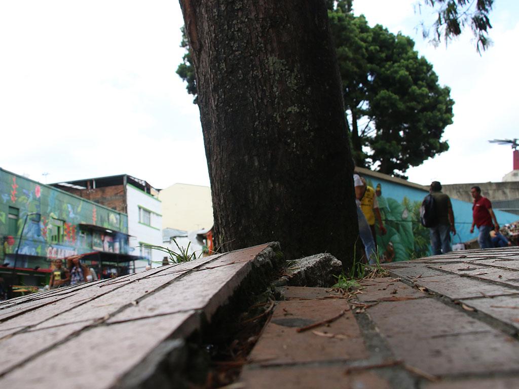 Arborización urbana; el debate entre la vida natural y humana