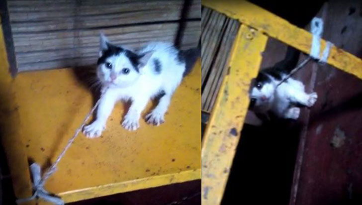 Mascotas enfermas y lesionadas por indolencia de sus amos