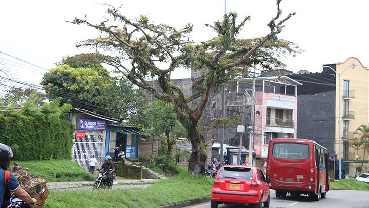 Árboles potencialmente peligrosos para la integridad de las personas