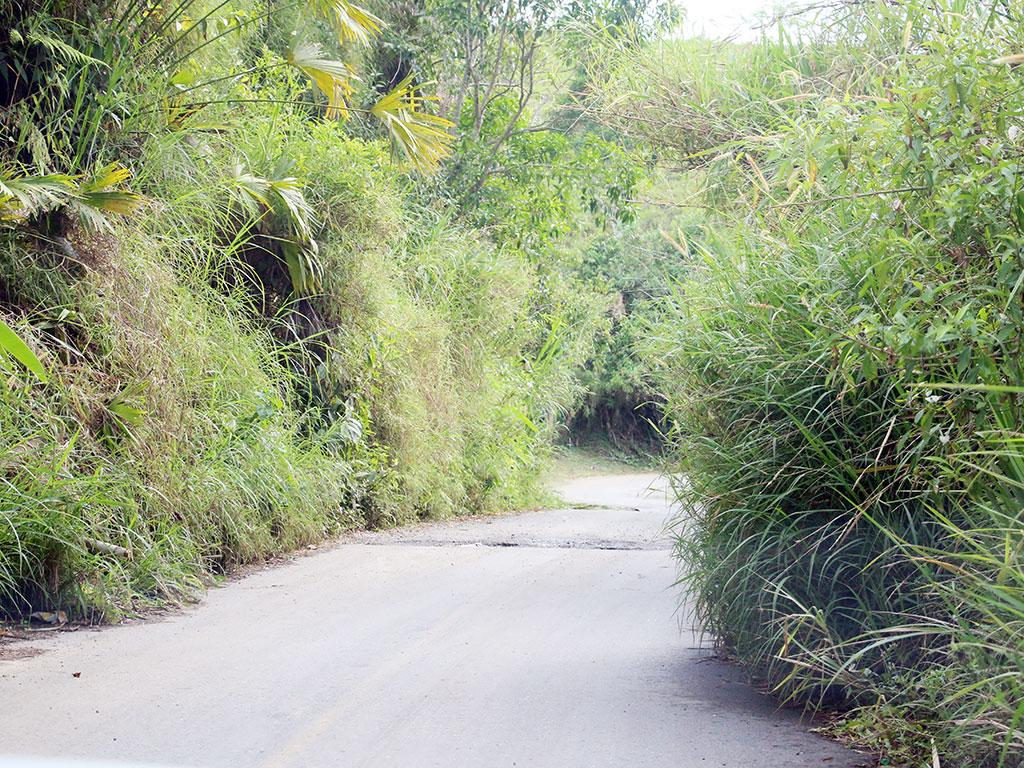 En Puerto Alejandría esperan una pronta intervención de la carretera