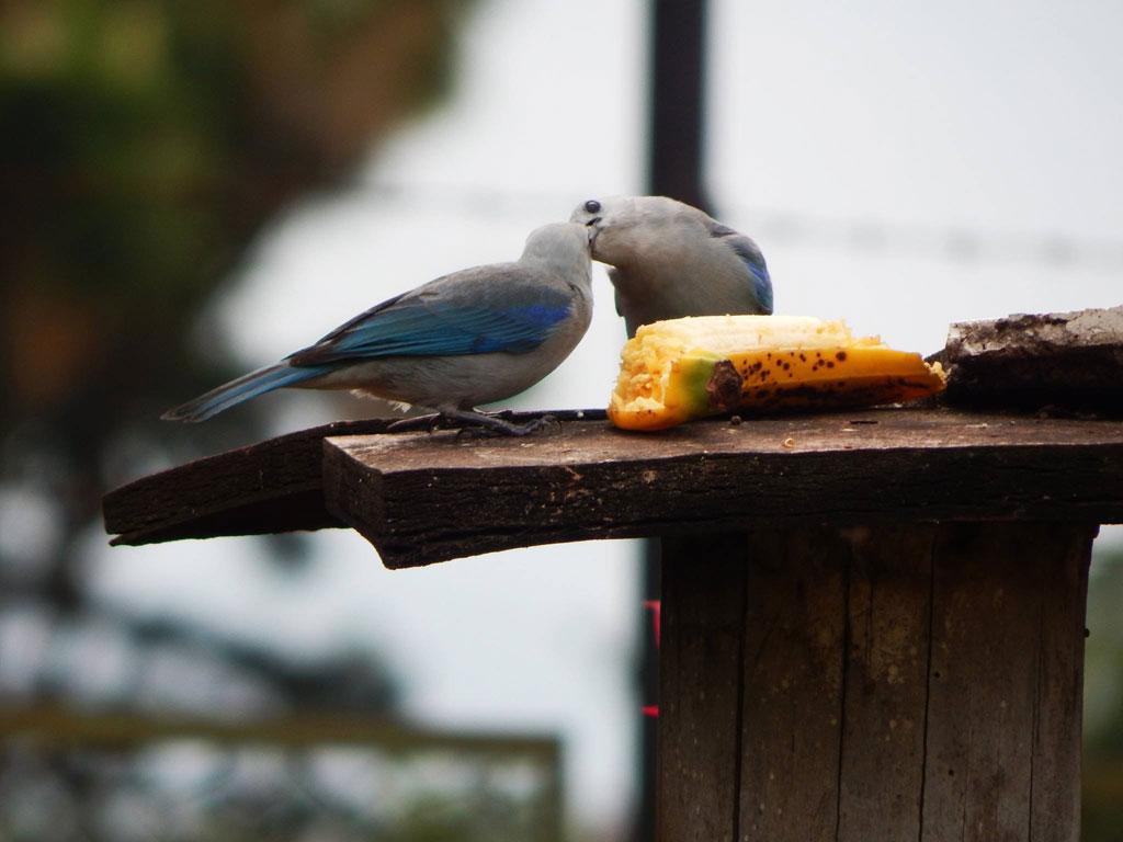 Aves del Quindío, un tesoro invaluable