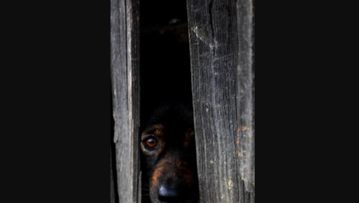 Juegos pirotécnicos pueden causar la muerte de las mascotas