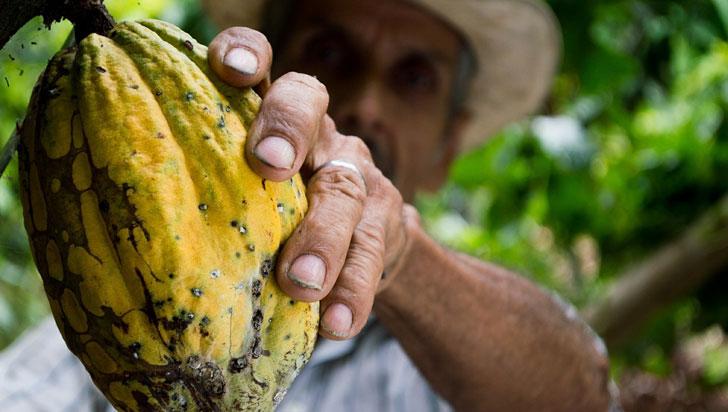 La producción colombiana de cacao creció 4,9 % en 2019