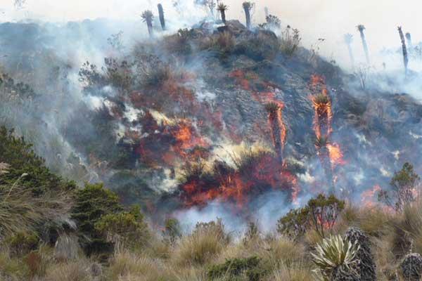 En el valle de Cocora se preparan para prevenir incendios forestales