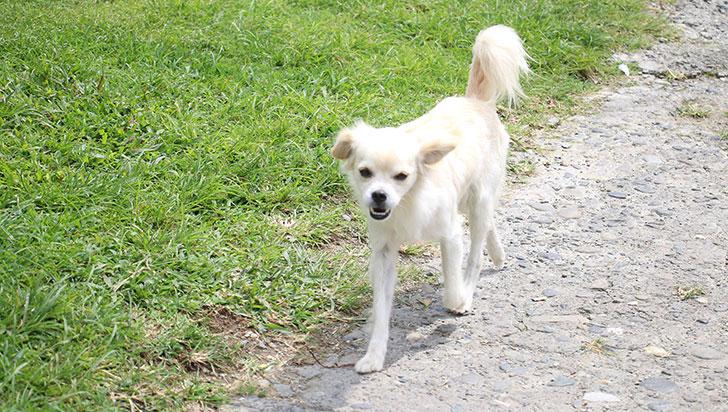 Con 16 votos a favor, concejo de Armenia aprobó el proyecto de bienestar animal