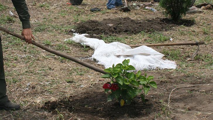 Con siembra de árboles se conmemorará día de la Tierra en el departamento