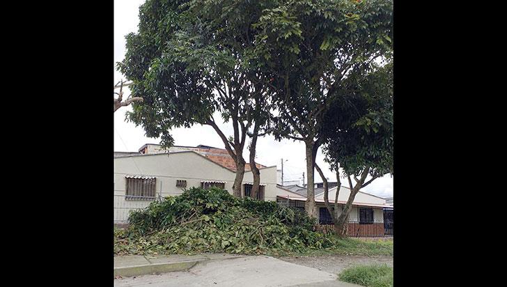 Vecinos aseguran que en La Grecia están dañando los árboles para habilitar un parqueadero