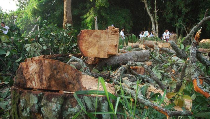 Colombia perdió 171.685 hectáreas de bosque por la deforestación en 2020