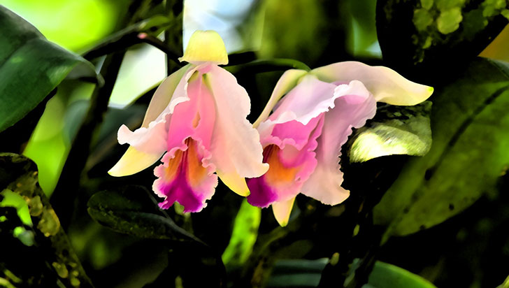5 especies de flora amenazadas en el Quindío