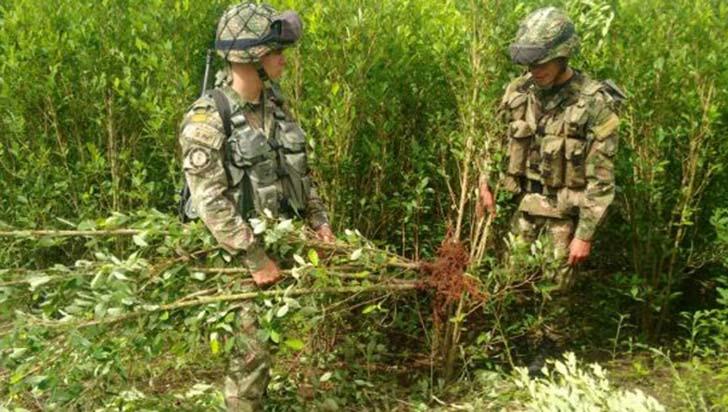 Quindío sin cultivos de coca, compromiso de las autoridades