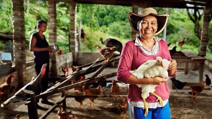 $8.000 millones para impulsar iniciativas empresariales de mujeres rurales