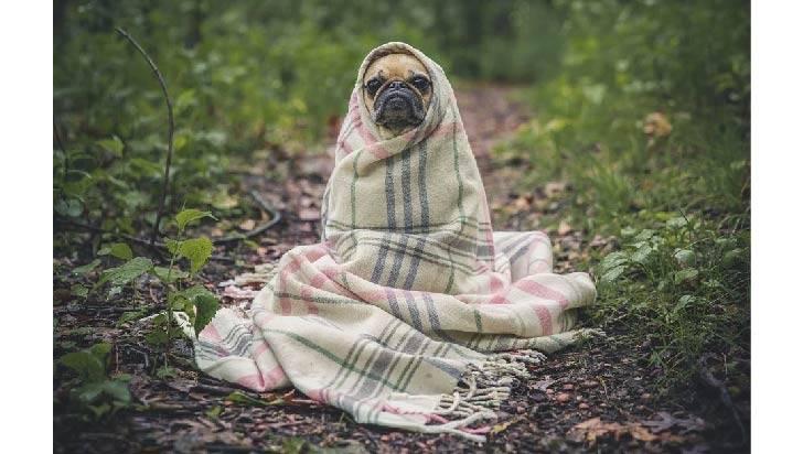 Cómo saber si mi perro sufre de depresión