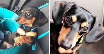Ziggy, el perro que sacrificaron por error en una veterinaria