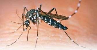 Dengue, causa probable de muerte de al menos 18 personas en Colombia en 2020