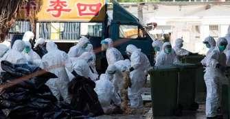 China registra un brote de gripe aviar en zona cercana a foco del coronavirus