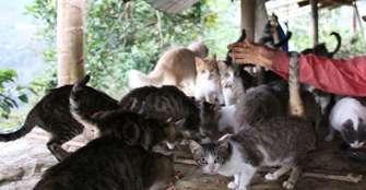 Una correcta relación con los animales puede evitar las enfermedades zoonóticas