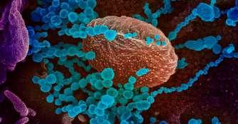 El coronavirus priva de escuela a uno de cada cinco alumnos en el mundo