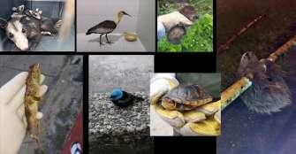 Mientras humanos se confinan, animales salen de sus resguardos