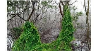 Ordenan a la Presidencia proteger isla reserva de la biosfera
