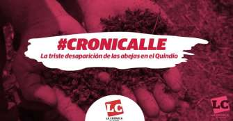 #Cronicalle | La triste desaparición de las abejas en el Quindío