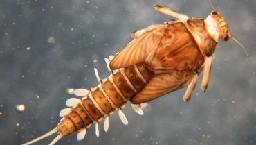 Los organismos olvidados, insectos III parte