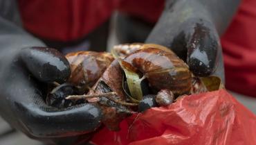 Breves del día: Compensación a subsidiados, 3 toneladas de caracol e Indemnización a víctimas