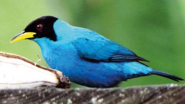La satisfacción de ver la belleza de las aves