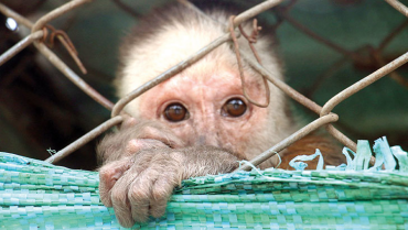 En el Quindío micos, venados, pumas y aves tienen una segunda oportunidad