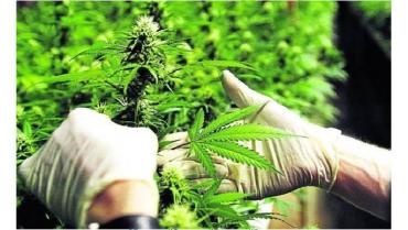 la-onu-reconoce-oficialmente-las-propiedades-medicinales-del-cannabis