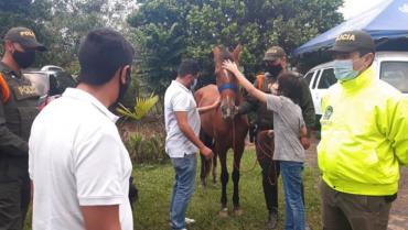 Recuperaron los 2 caballos que fueron hurtados en Calarcá