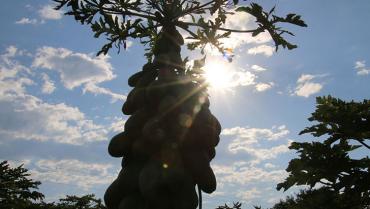 Pese a días soleados, Fenómeno de La Niña se mantiene