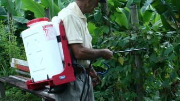 Uniquindío descubrió una forma de identificar residuos de plaguicidas en los alimentos