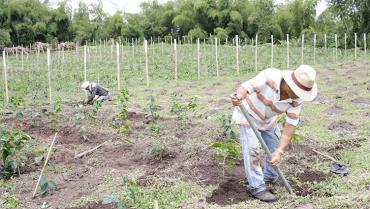 Comunidad Andina traza una hoja de ruta para reactivar comercio agropecuario