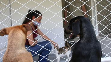Armenia necesita un centro de bienestar animal