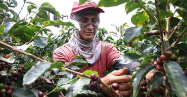 Café, chocolate, azúcar y sal, sin incremento del IVA; líderes siguen atentos a la reforma