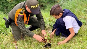 En el Quindío se han sembrado 103.000  árboles en plan de reforestación nacional
