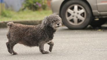 Perros y gatos callejeros, causa creciente de accidentes viales