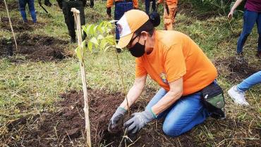 Para salvar una quebrada siembran 2.500 árboles