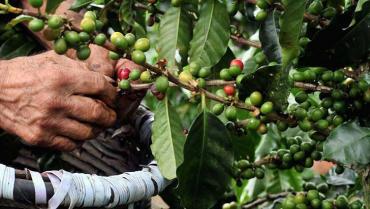 Clúster de café y cacao se presentaría en convocatorias de Colombia Productiva
