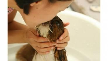 ¿Cada cuánto baña usted a su perro?