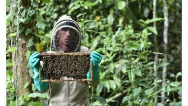 Un compromiso con las abejas y el medio ambiente