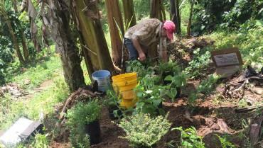 El proyecto Sudus protege a las abejas en el Quindío