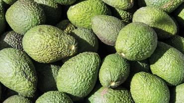 Agroalimentos, con potencial para aumentar exportaciones a Egipto y Arabia Saudita