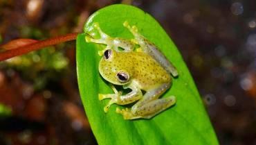 Avistamiento de anfibios y reptiles, actividad innovadora que se promociona desde Quindío